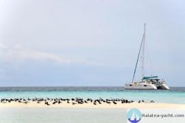 Catana 471 - Raiatea Yacht Broker